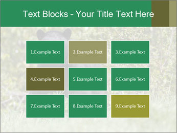 Black bear PowerPoint Templates - Slide 68