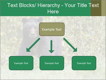 Black bear PowerPoint Templates - Slide 69