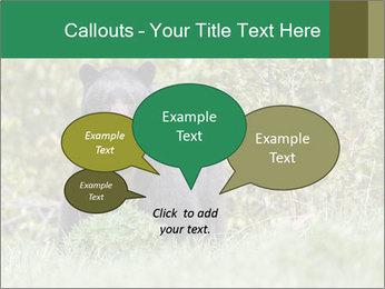 Black bear PowerPoint Templates - Slide 73