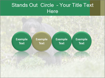 Black bear PowerPoint Templates - Slide 76