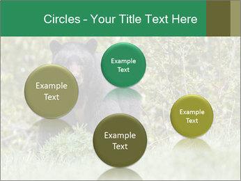 Black bear PowerPoint Templates - Slide 77