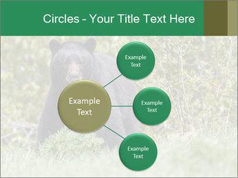 Black bear PowerPoint Templates - Slide 79