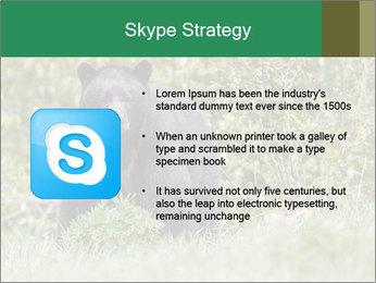 Black bear PowerPoint Templates - Slide 8