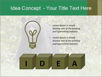 Black bear PowerPoint Templates - Slide 80