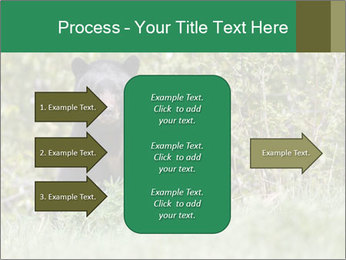 Black bear PowerPoint Templates - Slide 85
