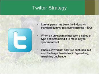 Black bear PowerPoint Templates - Slide 9