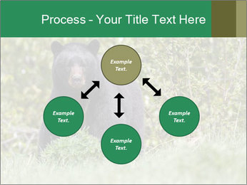 Black bear PowerPoint Templates - Slide 91