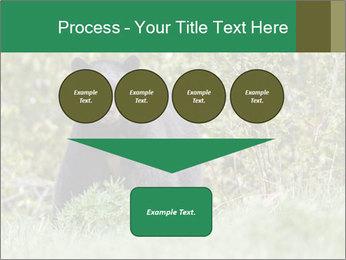 Black bear PowerPoint Templates - Slide 93