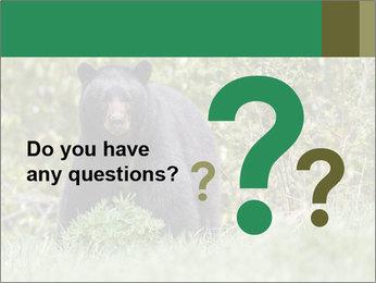 Black bear PowerPoint Templates - Slide 96