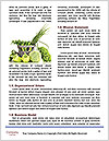 0000087742 Word Templates - Page 4
