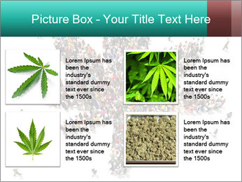 Medical marijuana PowerPoint Template - Slide 14