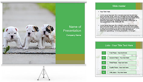 English bulldog PowerPoint Template
