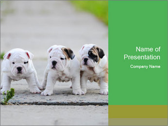 English bulldog PowerPoint Template - Slide 1