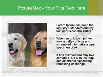 English bulldog PowerPoint Template - Slide 13