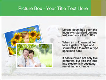 English bulldog PowerPoint Template - Slide 20