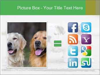 English bulldog PowerPoint Template - Slide 21