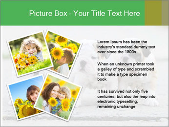 English bulldog PowerPoint Template - Slide 23