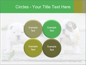 English bulldog PowerPoint Template - Slide 38