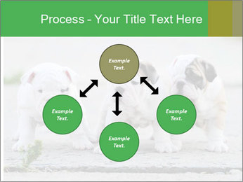 English bulldog PowerPoint Template - Slide 91