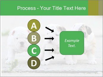 English bulldog PowerPoint Template - Slide 94