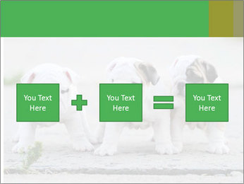 English bulldog PowerPoint Template - Slide 95