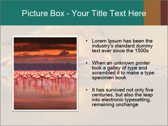 Red-billed PowerPoint Templates - Slide 13