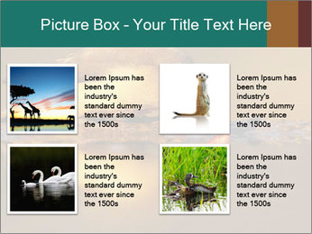 Red-billed PowerPoint Templates - Slide 14