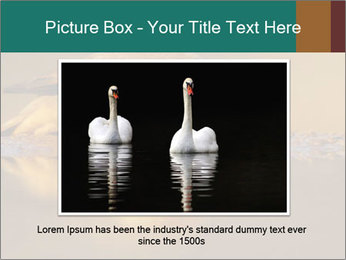 Red-billed PowerPoint Templates - Slide 15