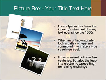 Red-billed PowerPoint Templates - Slide 17