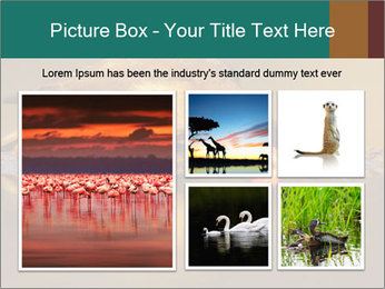 Red-billed PowerPoint Templates - Slide 19