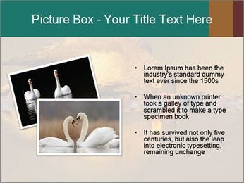 Red-billed PowerPoint Templates - Slide 20