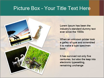 Red-billed PowerPoint Templates - Slide 23