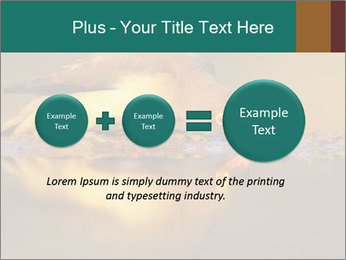 Red-billed PowerPoint Templates - Slide 75