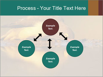 Red-billed PowerPoint Templates - Slide 91