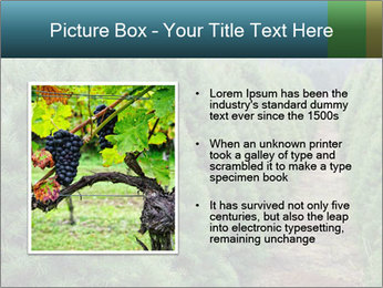 Christmas Tree Farm PowerPoint Template - Slide 13