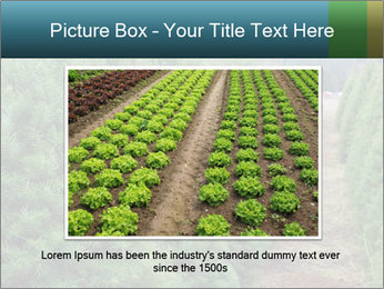 Christmas Tree Farm PowerPoint Template - Slide 15