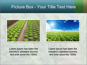 Christmas Tree Farm PowerPoint Template - Slide 18