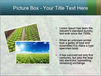 Christmas Tree Farm PowerPoint Template - Slide 20