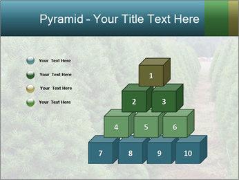 Christmas Tree Farm PowerPoint Template - Slide 31