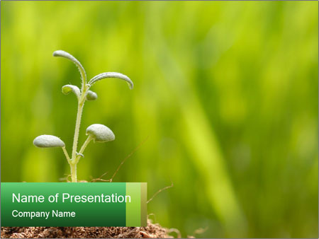 Birthday of a small plant PowerPoint Template