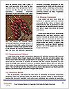 0000087793 Word Templates - Page 4