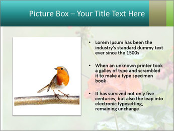 Male ruby-throated PowerPoint Templates - Slide 13