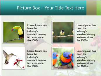 Male ruby-throated PowerPoint Templates - Slide 14