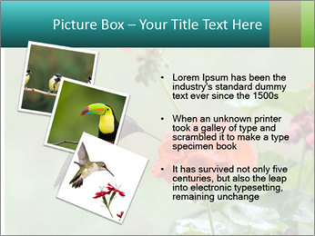 Male ruby-throated PowerPoint Templates - Slide 17