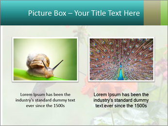 Male ruby-throated PowerPoint Templates - Slide 18