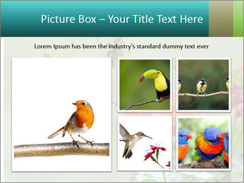 Male ruby-throated PowerPoint Templates - Slide 19