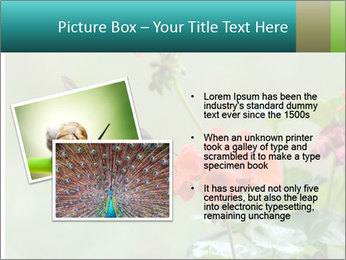 Male ruby-throated PowerPoint Templates - Slide 20