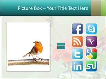 Male ruby-throated PowerPoint Templates - Slide 21