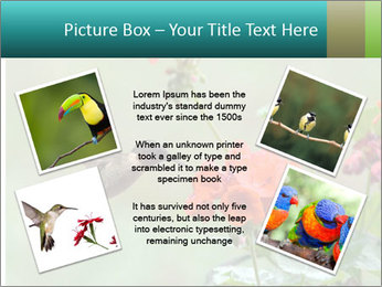 Male ruby-throated PowerPoint Templates - Slide 24