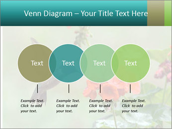 Male ruby-throated PowerPoint Templates - Slide 32